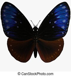 Butterfly - 3D Render Butterfly-Striped Blue Crow