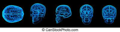 3d render human brain X ray