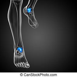 3d render illustration of the malleolus bone