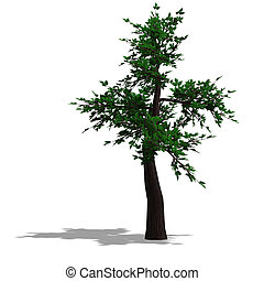 3D Render of a broadleef Tree