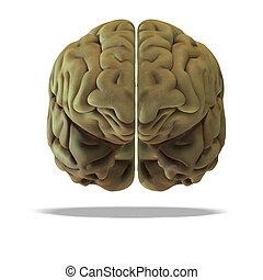 3d render of a human brain with clipping path