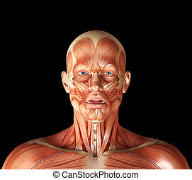 3d render of a medical figure with fashial expression showing frown muscles