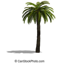 3D Render of a palm tree with shadow and clipping path over ...