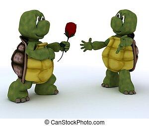 tortoise with romantic gift
