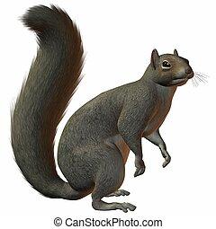 Squirrel - 3D Render of an Squirrel