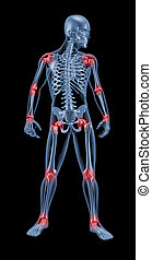 3D render of medical skeleton highlighting joints