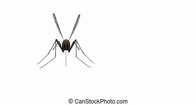 mosquito - 3d render of mosquito