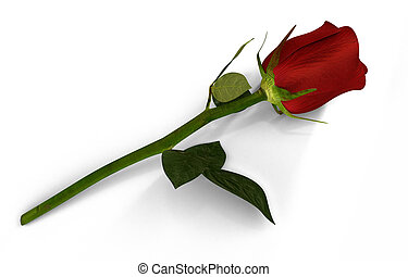 3D render of red rose isolated