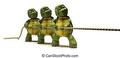 3D render of Tortoises pulling on a rope