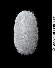 silkworm cocoon - 3d render silkworm cocoon isolated on dark...