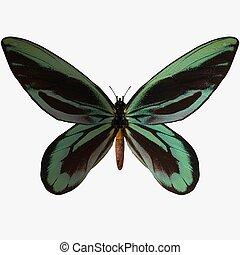 Butterfly - 3D Render Butterfly-QuAlexanderBirdwing