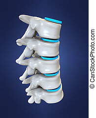 3d rendered anatomy illustration from a part of a human spine