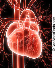 human heart - 3d rendered anatomy illustration of a human ...