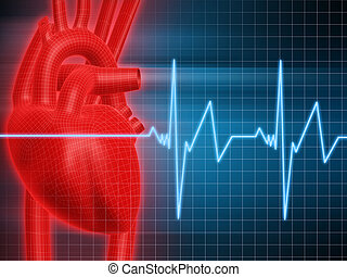 3d rendered anatomy illustration of human heart and heartbeat