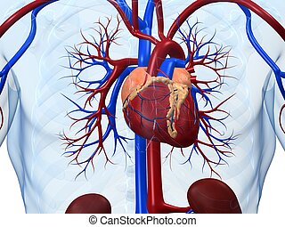 Human heart stock photos and images 84087 human heart pictures and human heart 3d rendered anatomy illustration of human ccuart Images