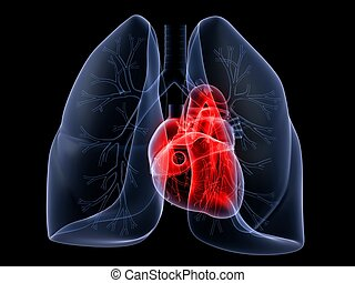 lung and heart - 3d rendered anatomy illustration of human...