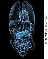highlighted pancreas - 3d rendered anatomy illustration of ...