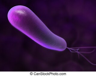 3d rendered close up of an isolated heliobacter bacterium