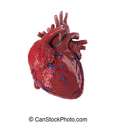 3d rendered human heart.