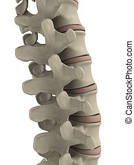 human spine - 3d rendered illustration from a part of human ...