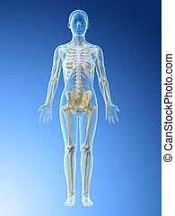 3d rendered illustration of a females nervous system
