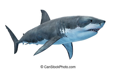 a great white shark - 3d rendered illustration of a great ...