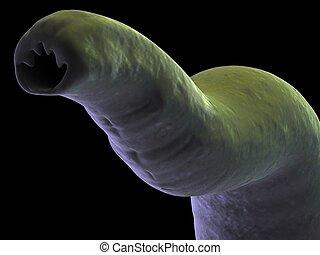 3d rendered illustration of a hook worm
