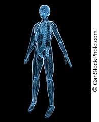 3d rendered illustration of a human anatomy