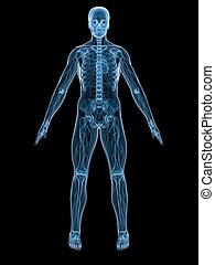 human anatomy - 3d rendered illustration of a human anatomy