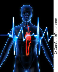 heartbeat - 3d rendered illustration of a human anatomy with...