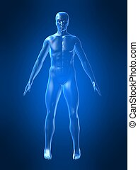 3d rendered illustration of a human body shape