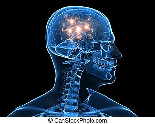 3d rendered illustration of a human head shape with active brain