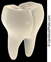 tooth - 3d rendered illustration of a human tooth