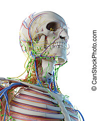 lymphatic system of head and neck