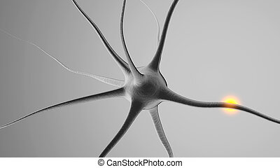 3D rendered Illustration of a Neuronal cell
