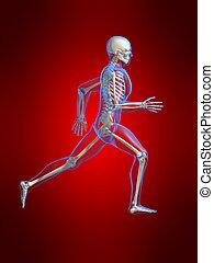 running skeleton - 3d rendered illustration of a running...