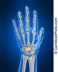 3d rendered illustration of a skeletal hand