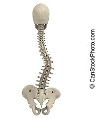 scoliosis - 3d rendered illustration of a spine with...
