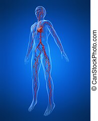 vascular system - 3d rendered illustration of a transparent...