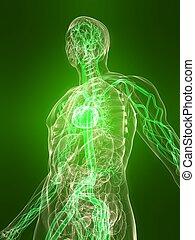 healthy vascular system - 3d rendered illustration of a ...