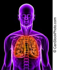 highlighted lung - 3d rendered illustration of a transparent...