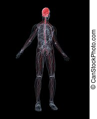 3d rendered illustration of a transparent body with highlighted nerve system