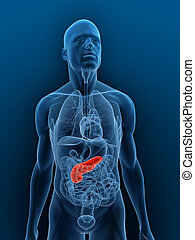 highlighted pancreas - 3d rendered illustration of a...