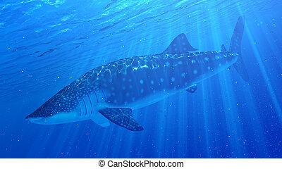 Megalodon shark eating blue whale - 3d render  Prehistoric