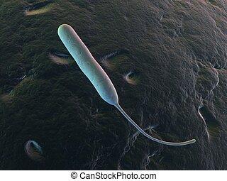 campylobacter jejuni - 3d rendered illustration of an...