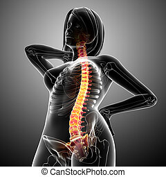 Female back pain anatomy