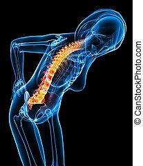 Female back pain anatomy