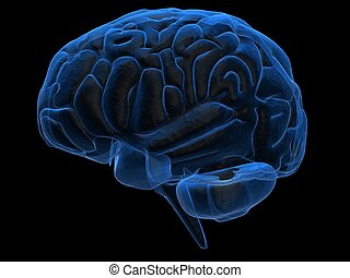 human brain - 3d rendered illustration of human brain