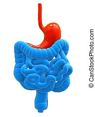 digestive system - 3d rendered illustration of human ...