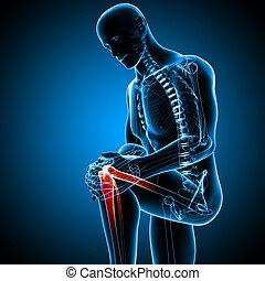 Male knee pain anatomy on blue